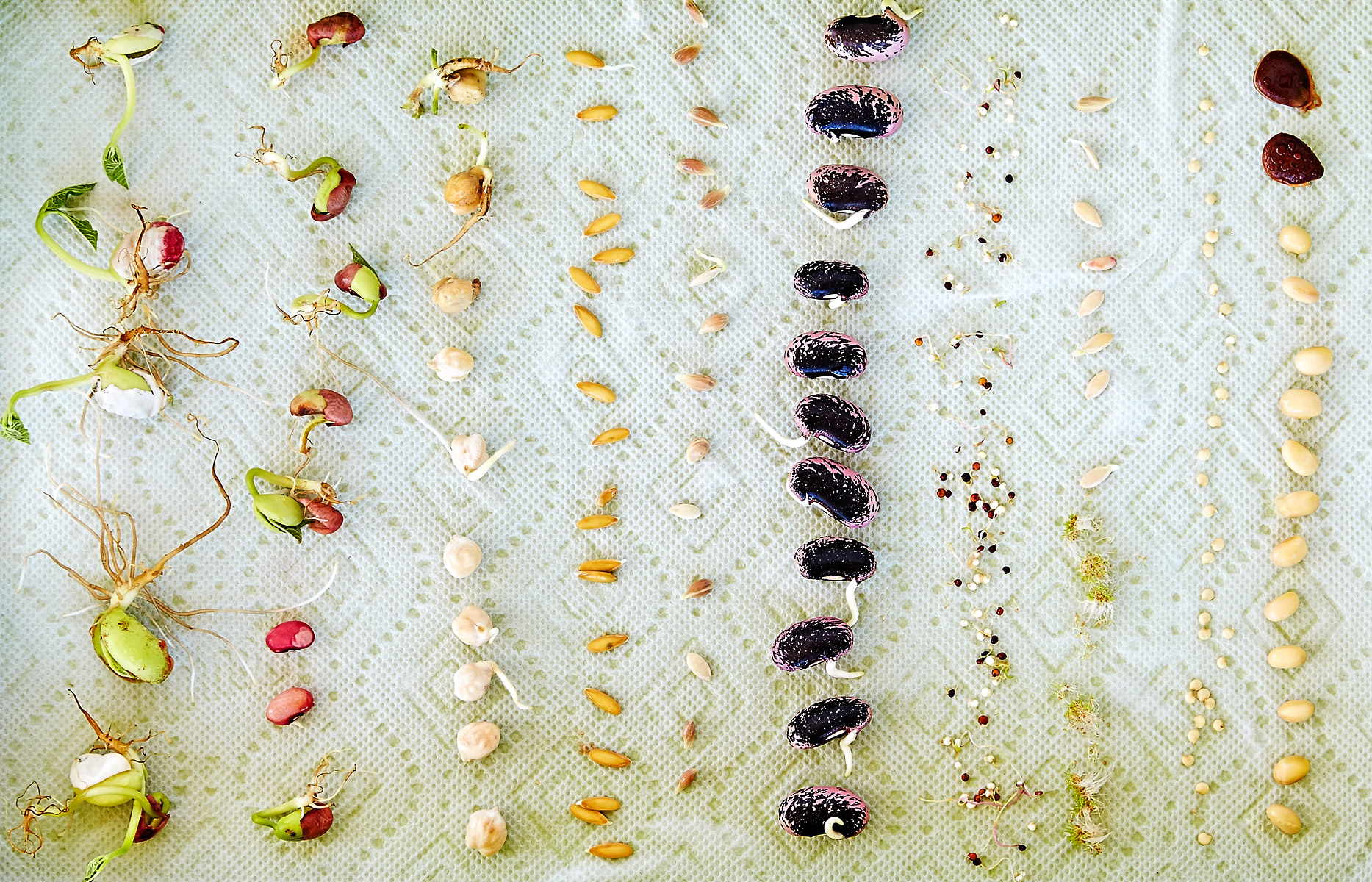 exploratorium-kitchen_seeds